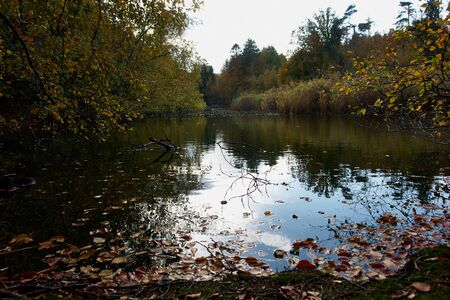 autumn motif: Autumn fall leaves on the water perfect nature seasonal background image