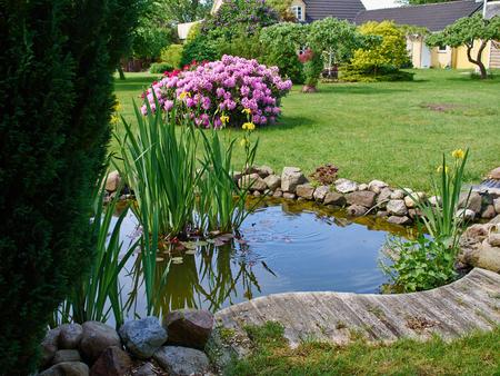 Prachtige klassieke tuin visvijver omgeven door gras tuinieren achtergrond