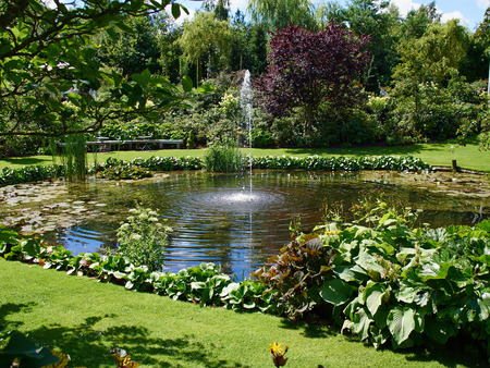 water garden: Ornamental pond and water fountain in a beautiful creative lush green blooming garden