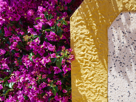 Blooming bougainvillea paper flower by a typical spanish wall stock blooming bougainvillea paper flower by a typical spanish wall stock photo picture and royalty free image image 83473851 mightylinksfo