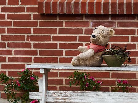 Lovely cute classical teddy bear seating on a wooden bench in a garden Banco de Imagens