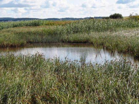 Salt Sea Marsh at Full Tide Funen Denmark - great for nature hiking