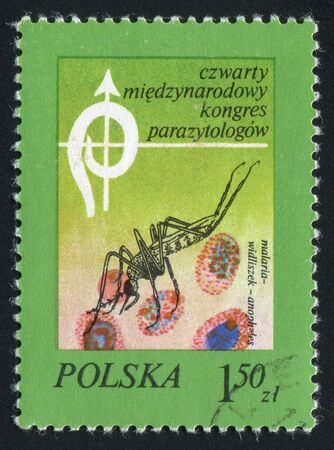 culicidae: POLAND - CIRCA 1978: Mosquito is a common insect in the family Culicidae. Anopheles Mosquito and Blood, circa 1978.