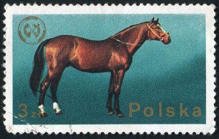 extant: Polonia - CIRCA 1988: El caballo es un mam�fero (Ungulata) Hyracotherium, una subespecie de uno de los siete especies de la familia de �quidos, alrededor del a�o 1988.