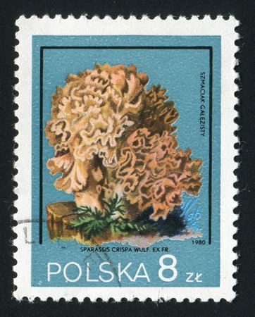 characterised: POLAND - CIRCA 1980: Sparassis is a genus of parasitic mushrooms characterised by their unique look, circa 1980.