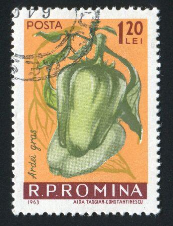 mild: ROMANIA - CIRCA 1963: Mild peppers. Vegetables hang on a branch, circa 1963.