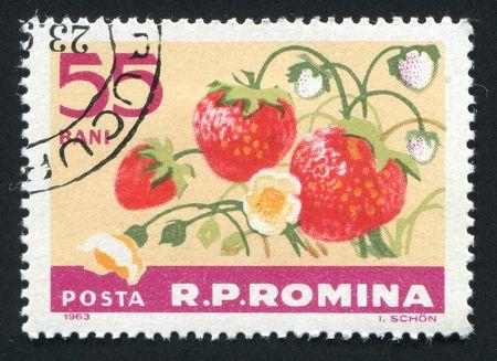 wild strawberry: ROMANIA -CIRCA 1963: The wild strawberry hangs on a branch, circa 1963. Stock Photo