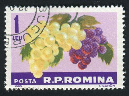 ROMANIA -CIRCA 1963: The grapes hangs on a branch, circa 1963. photo