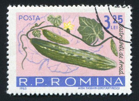 ROMANIA -CIRCA 1963: The Cucumbers hangs on a branch, circa 1963. photo