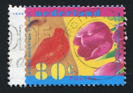 lips kiss: NETHERLANDS - CIRCA 1996: Female lips kiss a tulip, circa 1996.