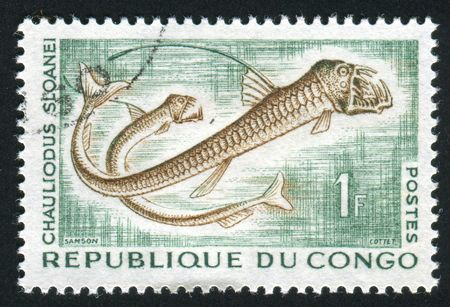 dragonfish: GAMBIA - CIRCA 1966: Sloanes viperfish, Chauliodus sloani, is a dragonfish of the genus Chauliodus, found in all tropical and subtropical oceans, at depths down to 2,500 m, circa 1966.