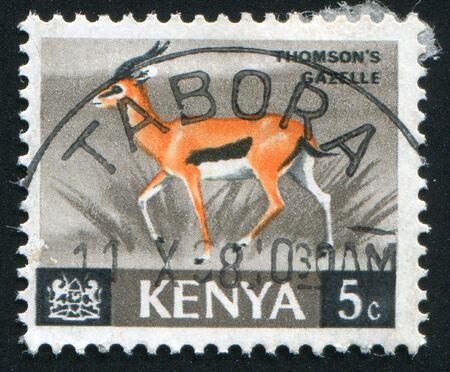 KENYA - CIRCA 1964: Animals. Thomson's gazelle, circa 1964. Stock Photo - 6238618
