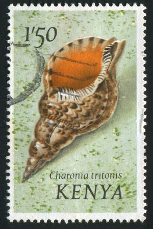 gastropod: KENYA - CIRCA 1971: Gastropod shell is a shell which is part of the body of a gastropod or snail, circa 1971.