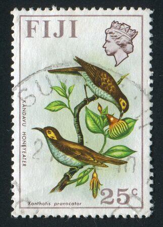 hone: FIJI - CIRCA 1970: Two birds. Kandavu hone eaters, circa 1970.