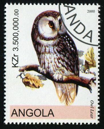 angola: ANGOLA - CIRCA 2000: Barn owl posing on branch, circa 2000.