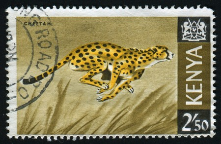 adult kenya: The wild nature of Kenya, circa 1964.