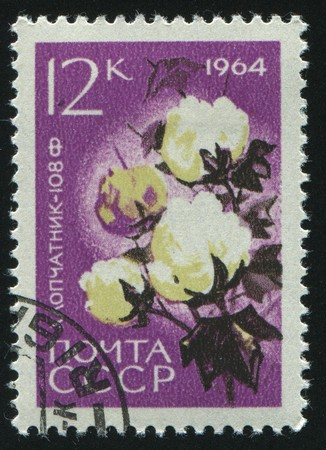 RUSSIA - CIRCA 1964: stamp printed by Russia, shows cotton, circa 1964. photo