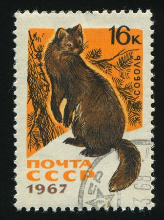 stoat: RUSSIA - CIRCA 1967: stamp printed by Russia, shows Sable, circa 1967. Stock Photo