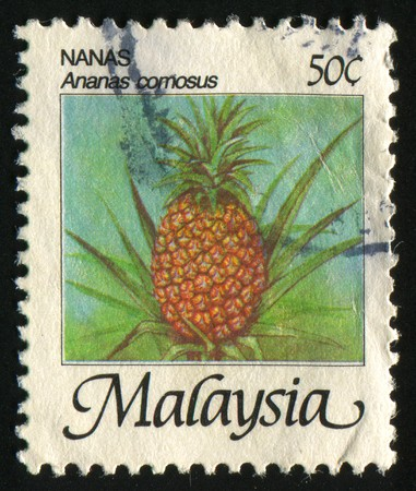 MALAYSIA - CIRCA 1986: Pineapple fruits on a palm tree, circa 1986. Stock Photo