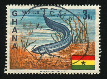 lungfish: GHANA - CIRCA 1966: African Lungfish, circa 1966. Stock Photo