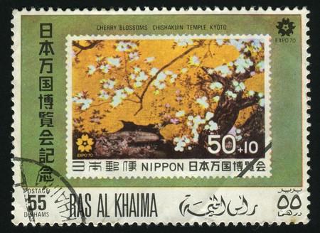 khaima: RAS AL KHAIMA - CIRCA 1970: In Japan the Oriental cherry blossoms, circa 1970. Stock Photo