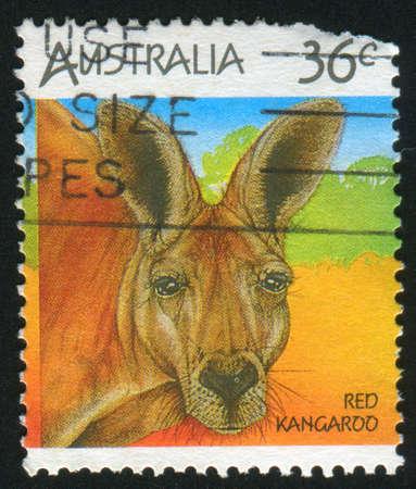 AUSTRALIA - CIRCA 1986: stamp printed by Australia, shows kangaroo, circa 1986 photo