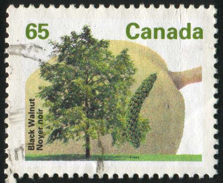 CANADA - CIRCA 1992: stamp printed by Canada, shows tree and flower, Black walnut, circa 1992 photo