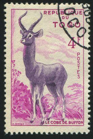 TOGO - CIRCA 1957: stamp printed by Togo, shows gazelles, circa 1957. photo