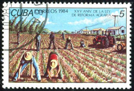 CUBA - CIRCA 1984: stamp printed by Cuba, shows peasant, circa 1984 photo