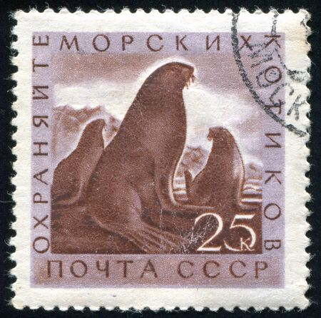 RUSSIA - CIRCA 1960: stamp printed by Russia, shows Fur seals, circa 1960. Stock Photo - 9161593