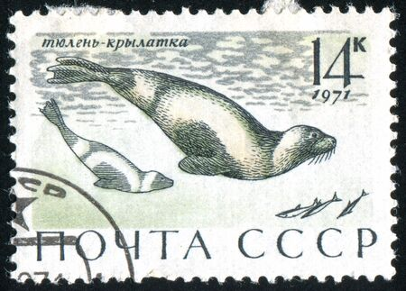 RUSSIA - CIRCA 1971: stamp printed by Russia, shows Ribbon seals, circa 1971. Stock Photo - 9161597