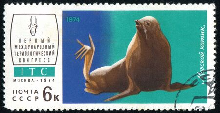 RUSSIA - CIRCA 1974: stamp printed by Russia, shows Sea lion, circa 1974. Stock Photo - 9161631