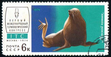 RUSSIA - CIRCA 1974: stamp printed by Russia, shows Sea lion, circa 1974. Stock Photo - 9161631