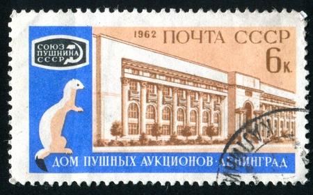 ermine: Rusia - alrededor de 1962: Sello impreso por Rusia, muestra la creaci�n de subasta y de armi�o, alrededor de 1962.