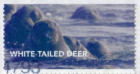 CANADA - CIRCA 2011: stamp printed by Canada, shows seal, circa 2011 Stock Photo - 9381269