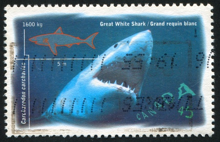CANADA - CIRCA 1997: stamp printed by Canada, shows Salt Water Fish, Great white shark, circa 1997 photo