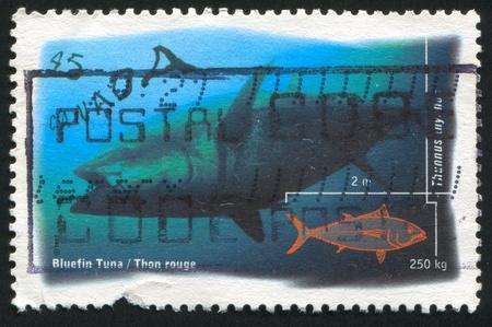 atun rojo: CANADA - CIRCA 1997: stamp printed by Canada, shows Salt Water Fish, Bluefin Tuna, circa 1997 Foto de archivo