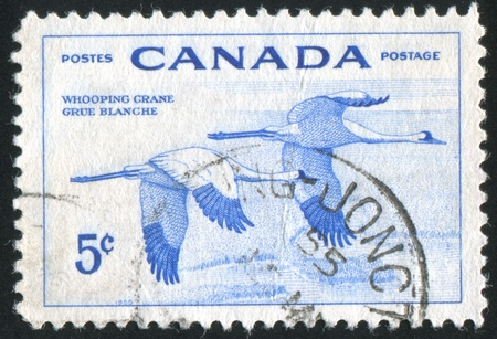 whooping: CANADA - CIRCA 1955: stamp printed by Canada, shows Whooping Granes, circa 1955