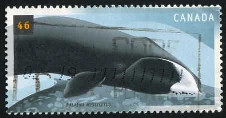 cetaceans: CANADA - CIRCA 2000: stamp printed by Canada, shows Cetaceans, Balaena Mysticatus, circa 2000