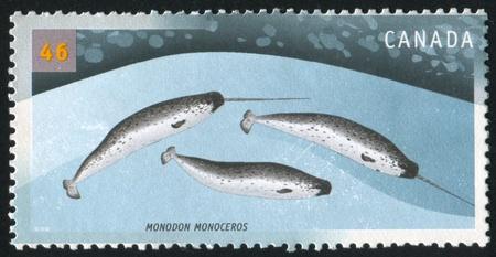 cetaceans: CANADA - CIRCA 2000: stamp printed by Canada, shows Cetaceans, Monodon Monoceros, circa 2000