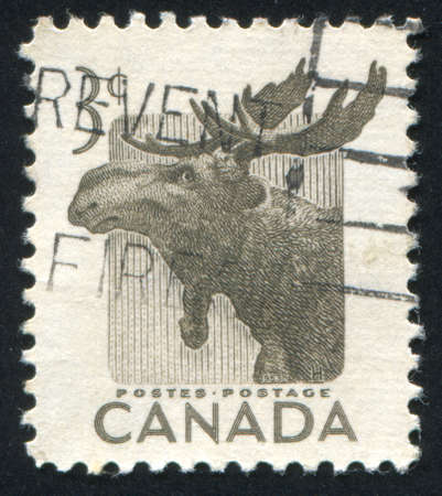 canada stamp: CANADA - CIRCA 1953: stamp printed by Canada, shows Moose circa 1953