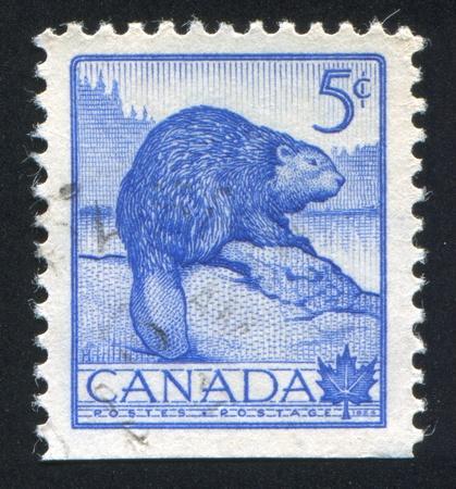 castor: Canad� - alrededor de 1954: Sello impreso por Canad�, muestra Beaver alrededor de 1954