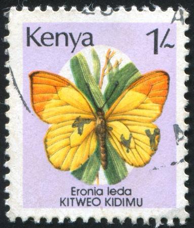 KENIA - CIRCA 1988: stamp printed by Kenya, shows butterfly Eronia leda, circa 1988 photo