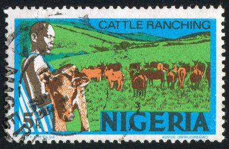 ranching: