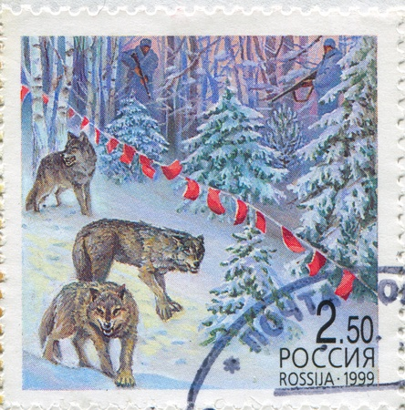 RUSSIA - CIRCA 1999: stamp printed by Russia, shows Wolves, circa 1999 photo