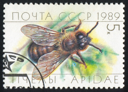 RUSSIA - CIRCA 1989: stamp printed by Russia, shows Honey bees, Drone, circa 1989 photo
