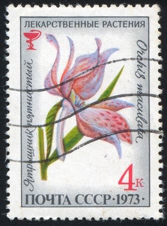 maculatus: RUSSIA - CIRCA 1973: stamp printed by Russia, shows flower Orchis maculatus, circa 1973.