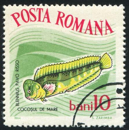 blenny: ROMANIA - CIRCA 1964: stamp printed by Romania, show peacock blenny, circa 1964.
