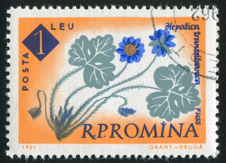 ROMANIA - CIRCA 1961: stamp printed by Romania, show flower Hepatica, circa 1961. photo