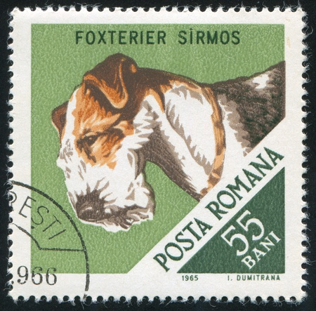 pedigreed: ROMANIA - CIRCA 1965: stamp printed by Romania, show Hunting Dog, Terrier, circa 1965. Stock Photo